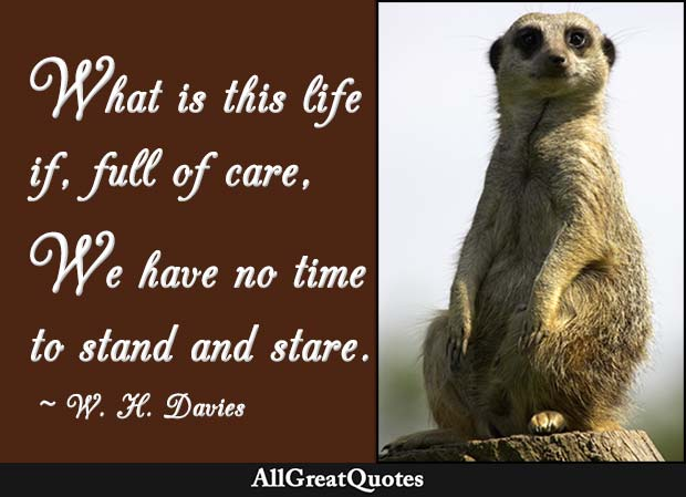 no time to stand and stare quote - w h davies
