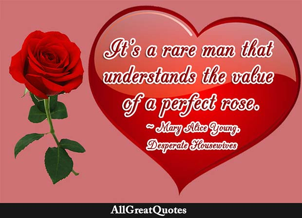 value of a perfect rose quote desperate housewives