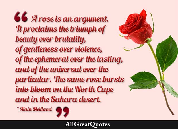 rose is an argument quote alain meilland
