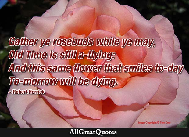 gather ye rosebuds quote robert herrick